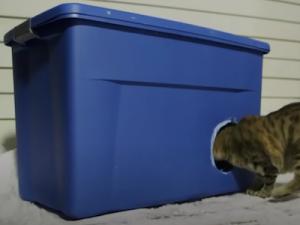 Fabriquer un abri pour protéger les chats du froid